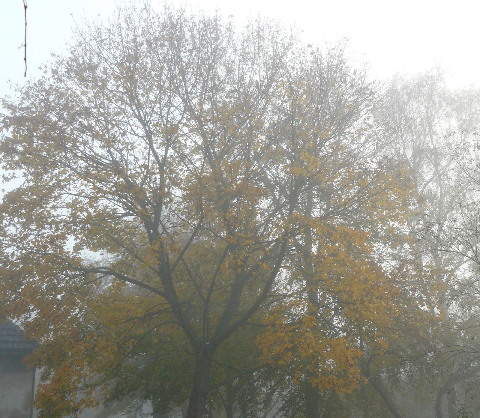 13.11.2014 Nebelverhangen