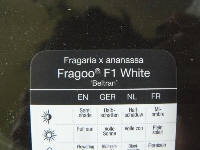 "Etikett ""Fragoo F1 White"""