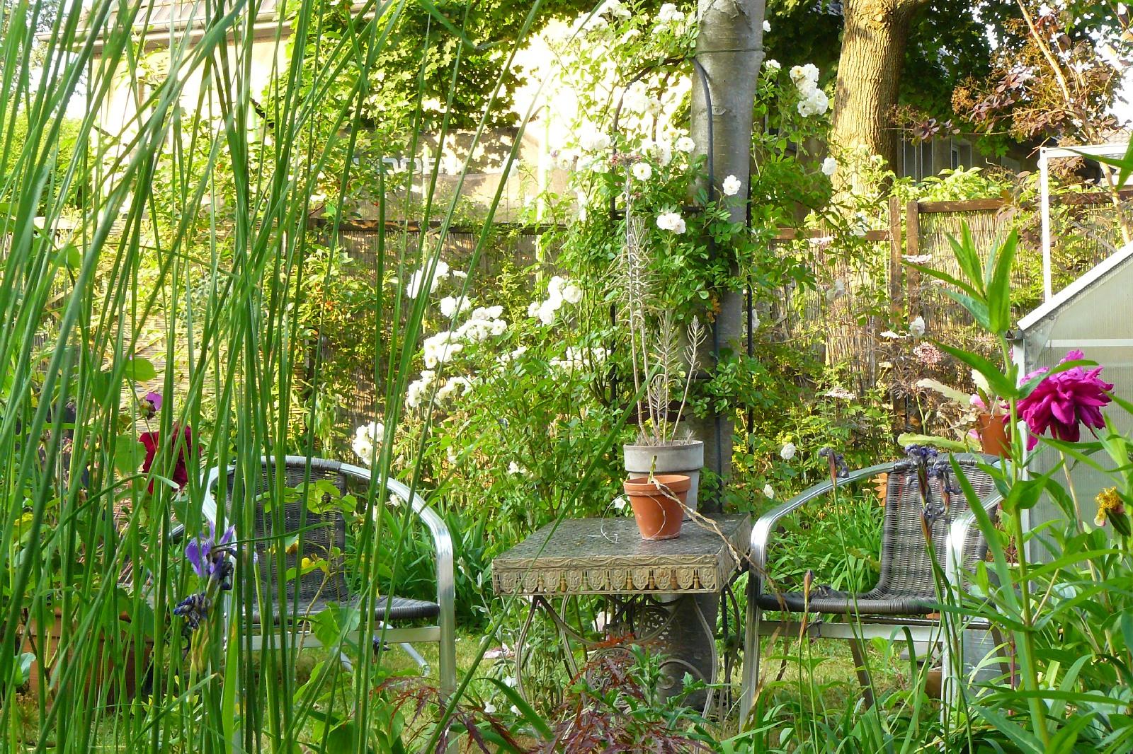 Rosen Lauch und Quaaak Dragonflys Gartenblog