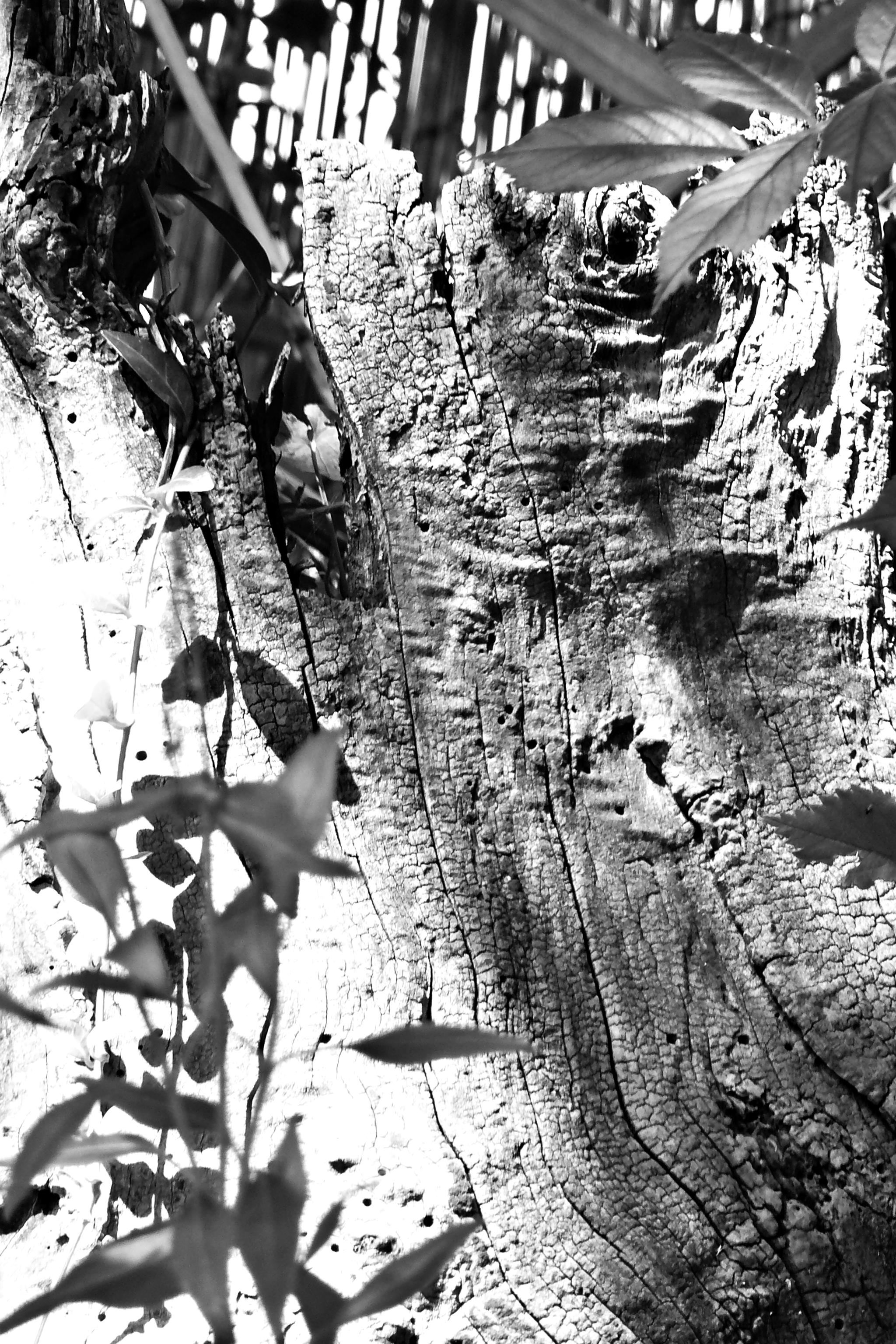 Baumstumpf Schwarz/Weiß