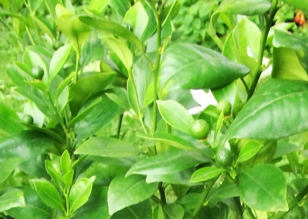 DSCF5537-crop_1600x1600_1000KB