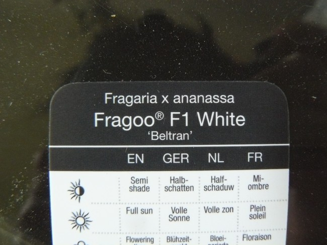 "Etikett ""Fragoo F1 White"""