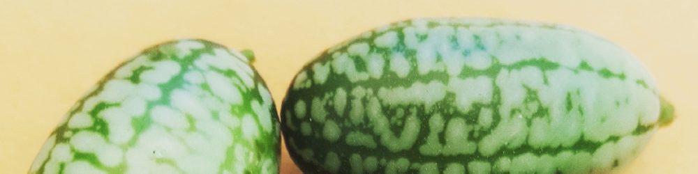 Mexikanische Minigurke - Melothria scabra