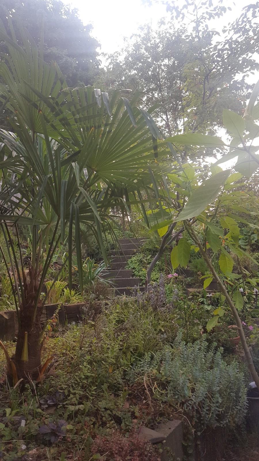Morgens früh im Garten