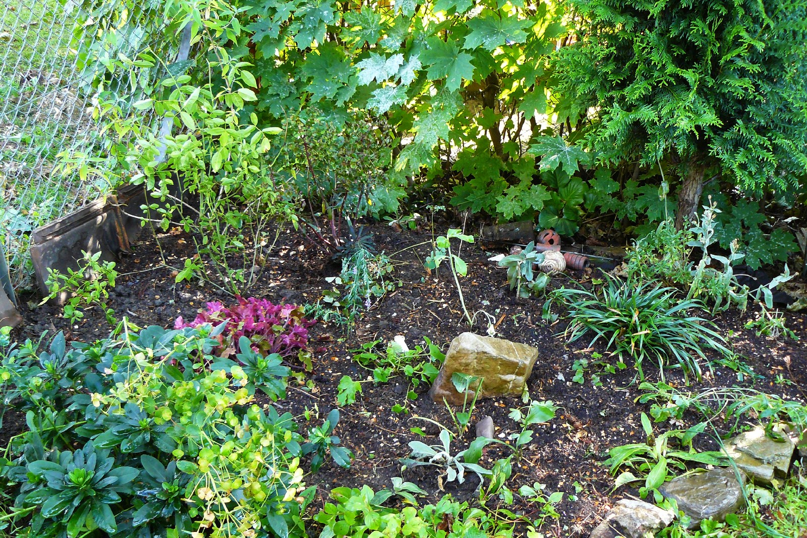 Phlox, Beet und Mondfinsternis | Dragonflys Gartenblog