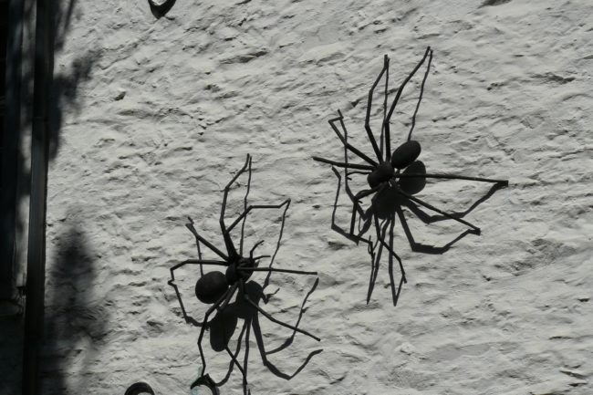 spinnen am torhaus Monschau