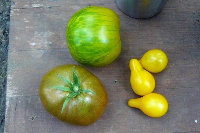 Tomaten in verschiedenen Sorten Grün, gelb, Schwarz