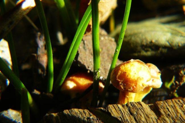 Pilze an Holz