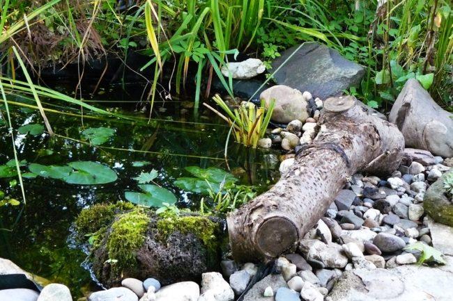 Totholz am Teich