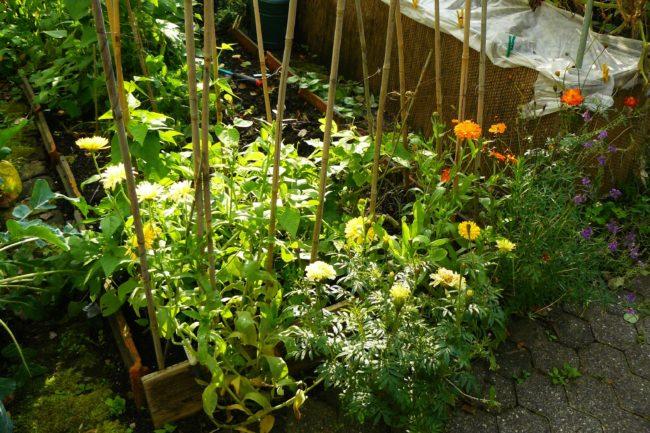 Blumen im Gemüsegarten