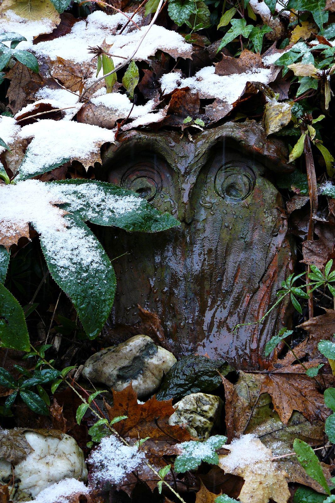 Erster Schnee auf Pflanzen