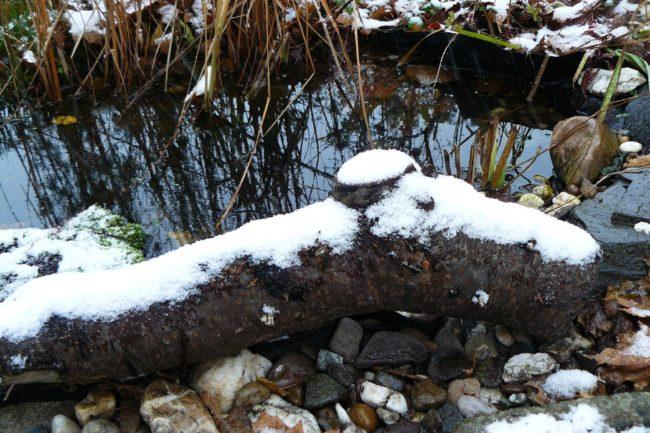 Schnee am Teich