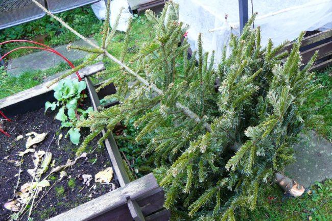 Ausgedienter Weihnachtsbaum