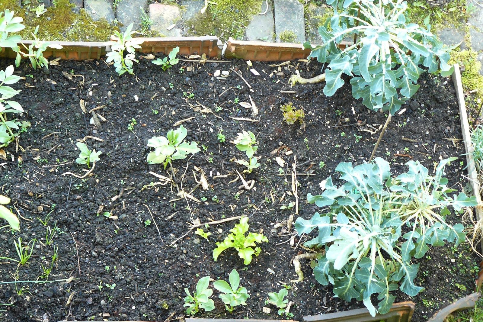Lahmer Küchengarten | Dragonflys Gartenblog