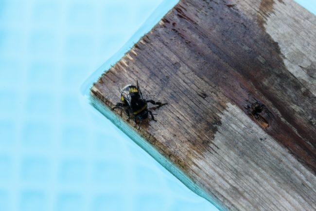 Rettungsfloß für Insekten