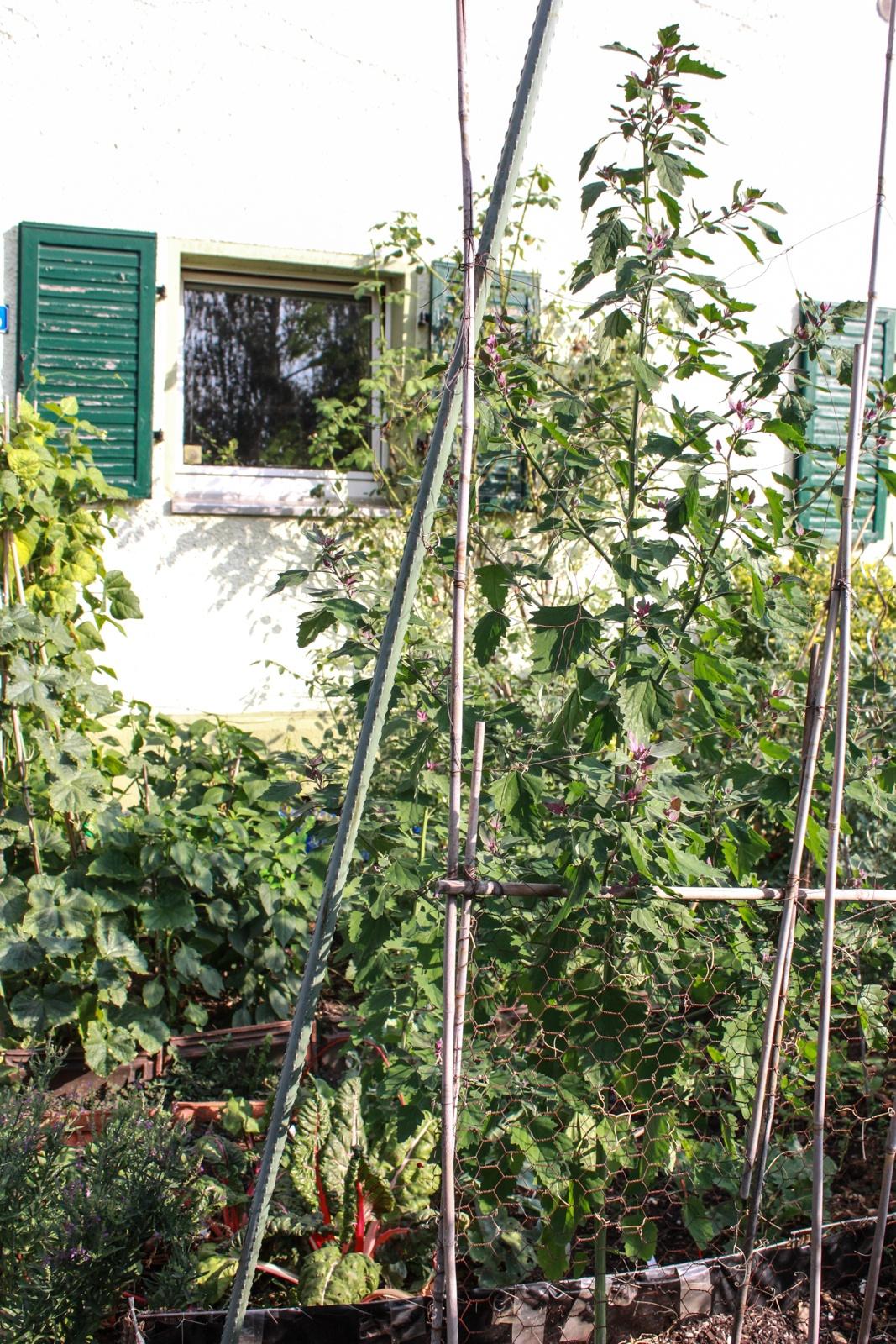 Gartenrundgang August