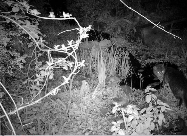 Nachtaufnahme Katze
