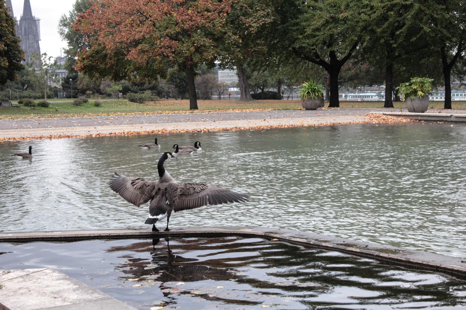 Rheinpark im Oktober