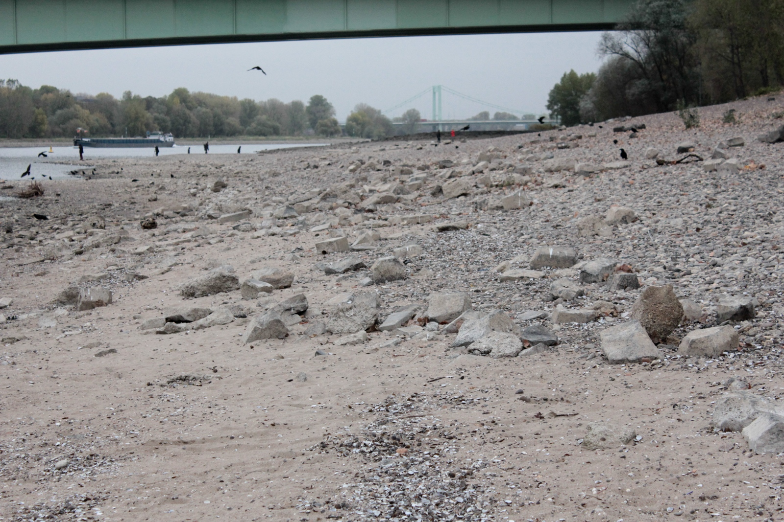 Niedrigwasser Rhein 2018