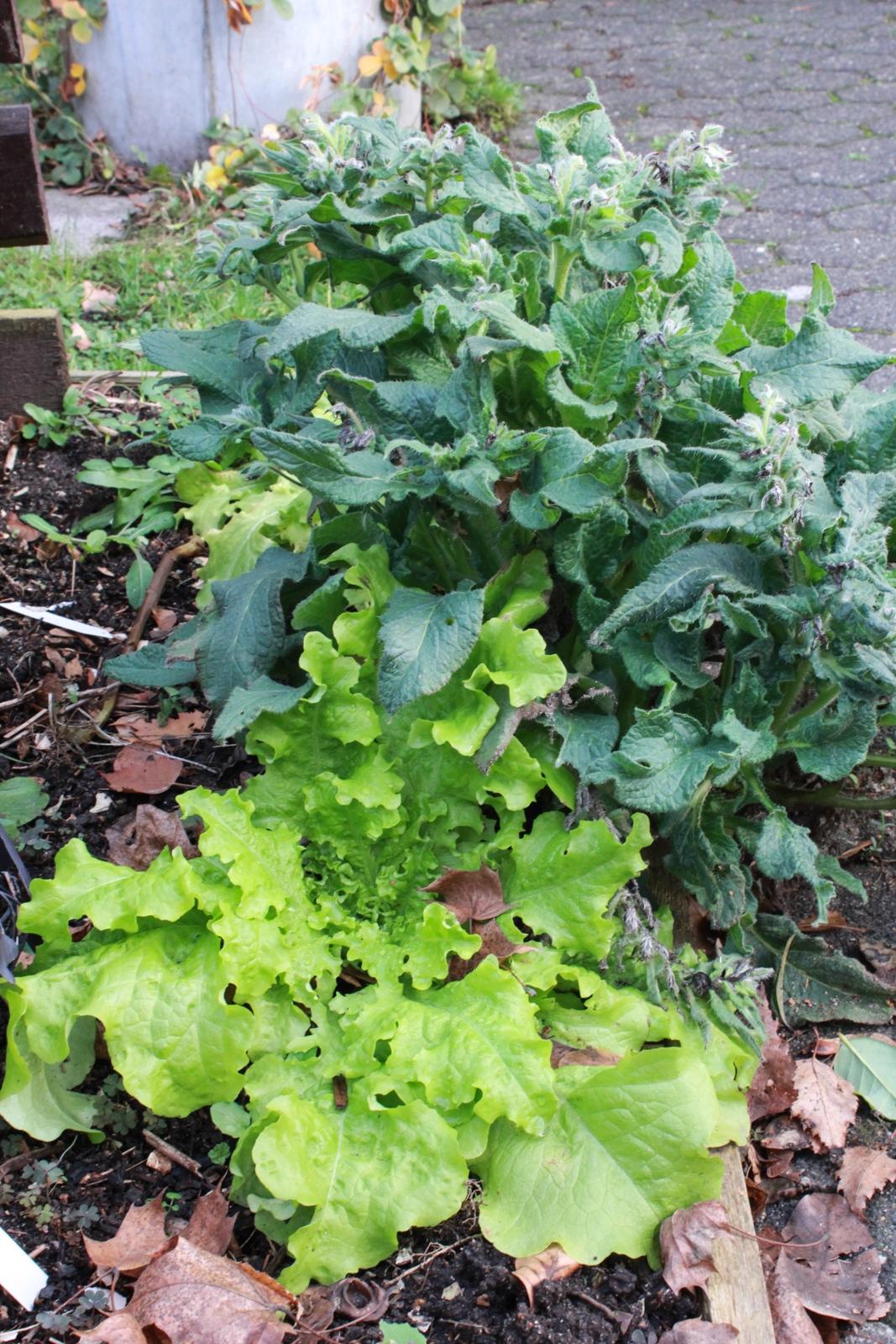 Gemüsegarten Dezember