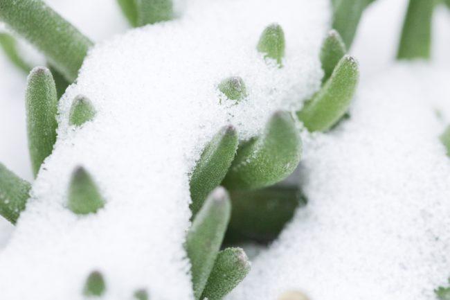 Schnee Macro