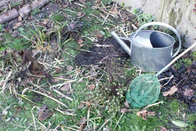 Teich reinigen im Frühling