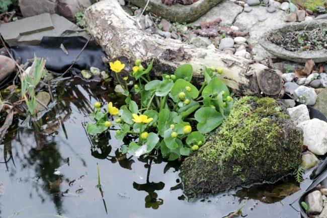 Teich im Frühjahr
