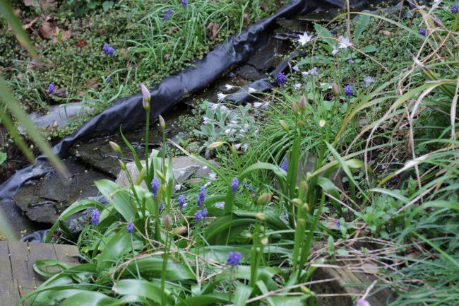Frühling am Bachlauf