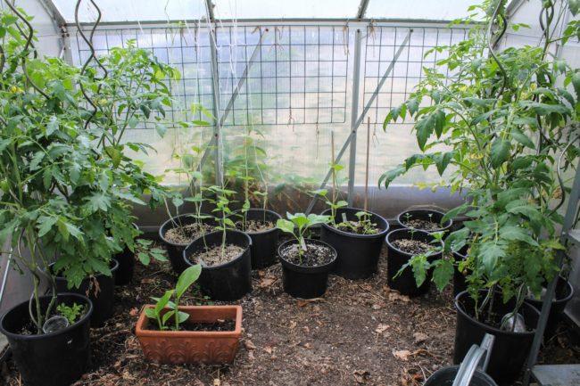 Gewächshauspflanzen