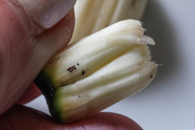 Anannasbanane Frucht der Monstera
