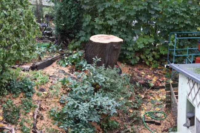 Baumfällarbeiten im Garten
