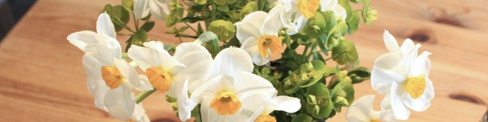 Narzissen 'Geranium'
