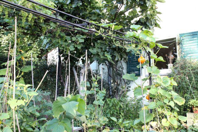 Pergola Pavillion im Garten