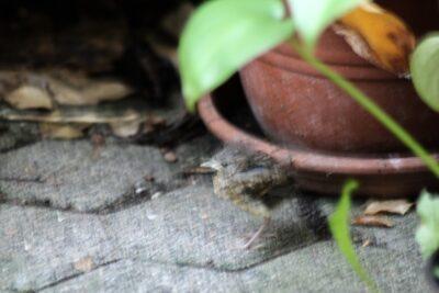 Rotkehlchenbaby