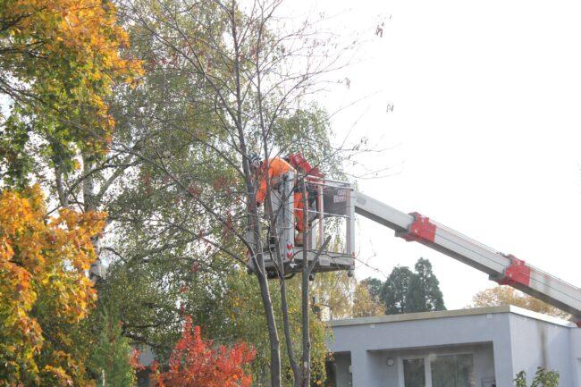 Baumpfleger bei der Arbeit.