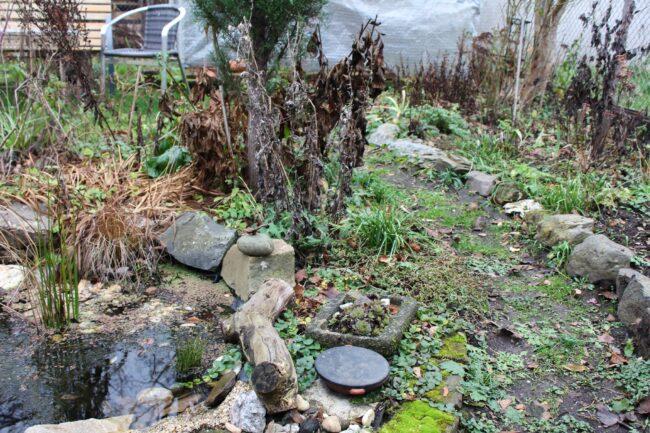 Garten im Januar