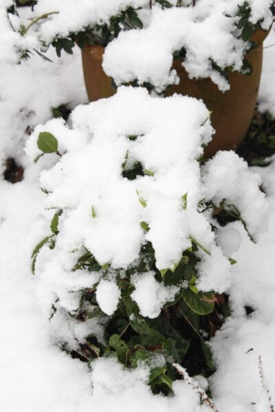 Schnee in Köln