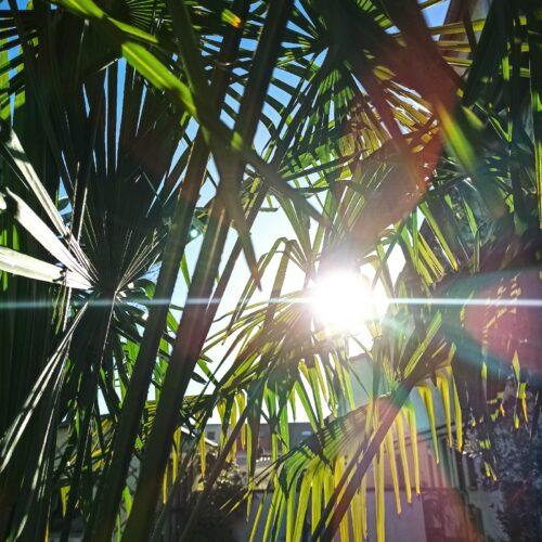 Sonne Palme