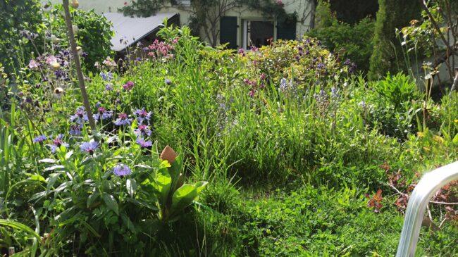Garten 2021